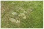 foot prints indicating dry turf