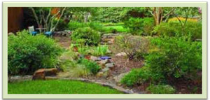 xeriscape with turf nl
