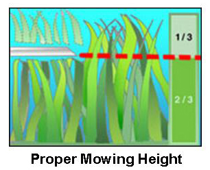 Proper mowing height