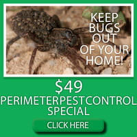 denver-lawn-fertilization-discount-1 3