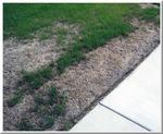 mites by sidewalk 2