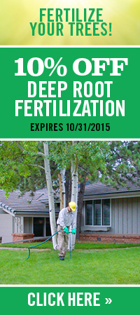 Denver-Tree-Service-Fertilization-Discount 4