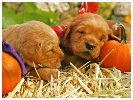 Puppys and gourds for newletter