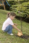 7447156 little girl watering a tree