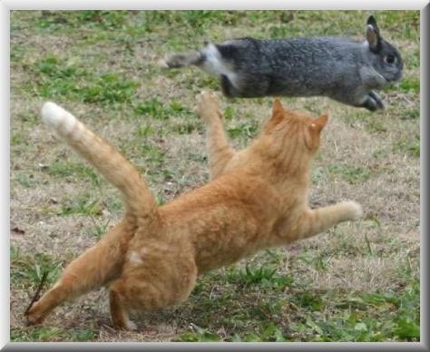 cat chasing a rabbit