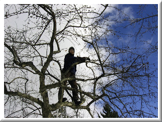 man pruning tree in winterwith frame